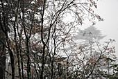 Trees in clouds, Trek towards Gocha La in Kangchenjunga region, Sikkim, Himalaya, Northern India, Asia
