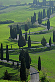 Country road winding up hill between cypresses and green fields in spring, Montepulciano region, Tuscany, Italy, Europe
