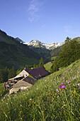 Alpine dairy Laufbichl Alpe, Hinterstein Valley, Bad Hindelang, Allgau, Swabia, Bavaria, Germany