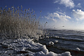 Grasses at lakeshore in winter, Lake Chiemsee, Bavaria, Germany