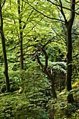Deciduous wood, Berg, Upper Bavaria, Germany