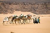 Camel Caravan in the libyan desert, Dromedaries, Camelus dromedarius, Akakus mountains, Libya, Sahara, North Africa