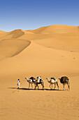 Camel Caravan in the libyan desert, Dromedaries, Camelus dromedarius, Libya, Sahara, North Africa