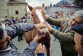 All Saints Day fair  November 2nd), Potes, valley of Liebana, Picos de Europa National Park, Cantabria, Spain