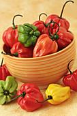 Red chilis peppers  rocotos)  Capsicum pubescens)