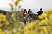 Mountain bikers on a track at Monte Colognola, Lago Trasimeno, Umbria, Italy, Europe