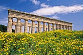 Temple of Concord,Spring at Segesta, Sicily, Italy  Doric temple built by Elymian people 430-420 BCE, with blue sky and white clouds  Yellow, wild chrysanthemums in the foreground  province of Trapani