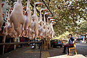 Dead ducks without feathers in front of a Chinese restaurant, Kunming, Yunnan, People's Republic of China, Asia