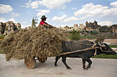 Water buffalo pulling cart with hay and farmer, karst formations in the background, Shilin, Yunnan, People's Republic of China, Asia