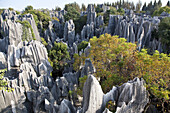 View over large stone forest, karst formations, Shilin, Yunnan, People's Republic of China, Asia