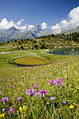 Lakes and marsh scenery, Alp Flix, Sur, Canton of Grisons, Switzerland