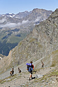 Hiker watching ibexes, Col Lauson, Valsavarenche, Aosta Valley, Italy