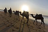 Camel train on the beach, Atlantic Ocean, Essouira, Morocco, Africa