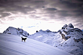 Dog on snow-covered mountain, Ciampestrinspitze in background, Fanes range, Trentino-Alto Adige/Südtirol, Italy