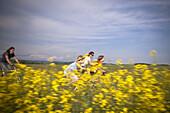 Family cycling along canola field, Innviertel, Upper Austria, Austria