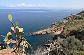 Cactus and coast area in the sunlight, National Park Zingaro, Province Trapani, Sicily, Italy, Europe