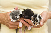 Newborn domestic cats in a woman's hand, Germany