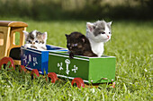 Young domestic cats playing with a wooden toy train in the garden, Germany
