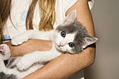 young domestic cat, kitten in a girl's arms, Germany