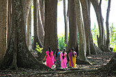Indian women wearing colourful saris walking through the coastal forest of Radha Nagar Beach, Beach 7, Havelock Island, Andamans, India