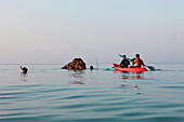 Swimming elephant and his mahut in the Andaman Sea together with tourists, Radha Nagar Beach, Beach 7, Havelock Island, Andamans, India