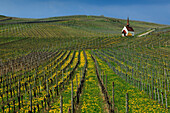 Eichert chapel in the vineyards near Jechtingen, Kaiserstuhl, Breisgau, Black Forest, Baden-Württemberg, Germany