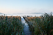 Landing Stage, wooden jetty at lake Scharmuetzelsee, Bad Saarow, Land Brandenburg, Germany