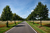 Tree-lines allee, Altdoebern, Land Brandenburg, Germany
