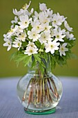 Flower bouquet of anemone nemorosas in a vase on the table