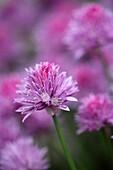 Petals of violet flower in summer