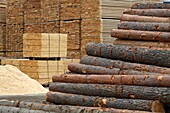 Piles of wood in front of the OSB pallets, production of wood