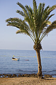 Palm tree on the beach and boat in the water