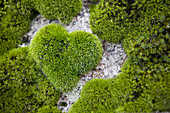 Moss in the form of heart on a stone