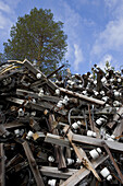 Scrap-heap of telephone poles
