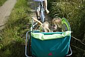 Two girls in bike cart