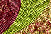 Art of apples, Kivik, osterlen, Skane, Sweden