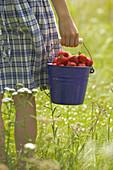 Strawberries in buckett