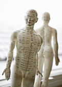 Model for acupuncture