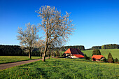 Blooming cherry trees at a country road in front of Black Forest house, Black Forest, Baden-Württemberg, Germany, Europe