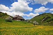 Black Forest house in idyllic landscape, Black Forest, Baden-Württemberg, Germany, Europe
