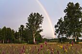 Regenbogen im Alpenvorland, Oberbayern, Deutschland