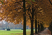 Autumn leaves and tree-lined paths in the park, chestnut trees, City walls, Braunschweig, Brunswick, Lower Saxony, Northern Germany