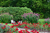 Red roses and garden chairs in the garden of Oldenburg castle, Oldenburg, Lower Saxony, Germany