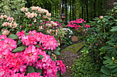 Flowering rhododendron, landscape garden, castle park, Horneburg castle, Horneburg, Lower Saxony, Germany
