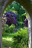 Flowering rhododendrons in full bloom, seen through the archway, ruined tower, Breidings garden, Soltau, Lower Saxony, Germany