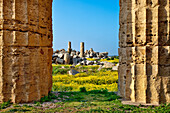 Temple, Selinute, Sicily, Italy