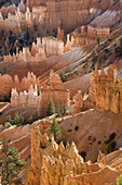 Giant natural amphitheater created by erosion along the eastern side of the Paunsaugunt Plateau, Bryce Canyon National Park. Utah, USA