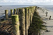 Wooden groines on island Spiekeroog at low tide  East Frisia  North Sea  Germany