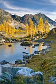 Alpine larches Larix lyallii and tarn in Monica Meadows, Purcell Mountains British Columbia