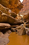 Hiking to Indian Creek waterfall on a Wilderness River Adventures motorized pontoon rafting trip down the Meander Canyon section of the Colorado River in Canyonlands National Park, Utah, USA